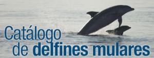 Catálogo delfines